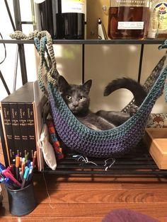 Free Crochet Toy Hammock Pattern I Crocheted A Cat Hammock Crochet - Cat in the box ❤️ - Katzen :) Chat Crochet, Crochet Toys, Free Crochet, Crochet Cat Toys, Crochet Cat Pattern, Toy Hammock, Diy Cat Hammock, Hammock Ideas, Crochet Hammock Diy