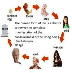 Human Life Cycle, Srila Prabhupada, Old Age, Life Cycles, Death, Wellness, Children, Young Children, Boys