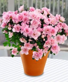 31 best mothers day flowers gifts images on pinterest mothers mothers day flowers 2014 detroit area florist mancusos florist st mightylinksfo