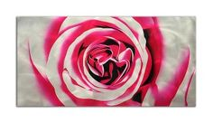 Obraz na Aluminium - cm Bright, Rose, Flowers, Plants, Pink, Plant, Roses, Royal Icing Flowers, Flower