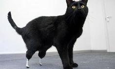 Bionic Leg Implants