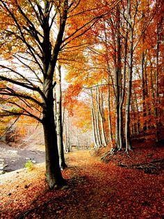 Parc Natural del Montseny amb els colors de la tardor (Catalunya - Catalonia)