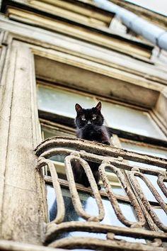 KITTEH: \ De Catinoffs be atz Hex Hall. Wut dey be doin' der? Throwin' a hellacious slumber party. Wanna goes?\