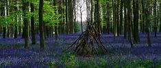 Ashridge Park, Hertfordshire, UK  by UkGardenPhotos.