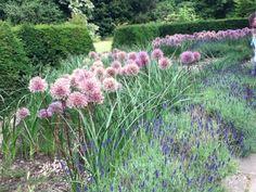 Flowers in howick gardens