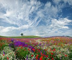Reconnect with nature.  Photo of Flower Fields by Valery Simov - Bulgaria