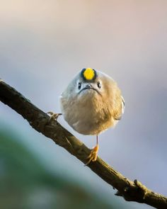 Finnish Photographer Shoots Real Life Angry Birds, And We Can't Finish Looking At Them Ossi Saarinen is a nature photographer based in Finland. He has been photographing different types of wild animals in Finnish nature but his bird pho... http://drwong.live/weird/finnish-photographer-shoots-real-life-angry-birds-cant-finish-looking/