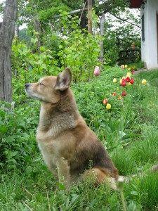 Wesenstest Fur Hunde Aufmerksamer Hund Hundeverhalten Hunde Wesen