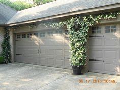 Confederate Jasmine growing between garage doors – garden garage ideas Outdoor Decor, Outdoor Living, Garage Doors, Wire Trellis, Front Yard, Trees For Front Yard, Garage, Curb Appeal, Doors