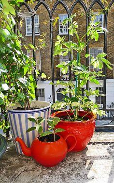 Balcony garden: teapot planter