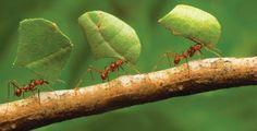 Il futuro del pianeta Terra è delle formiche - NextMe