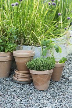 Terracotta pots! https://www.granit.com/category.html/uteliv
