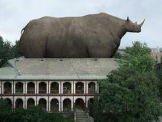 #liu_di #china #artist #urban #animal_regulation #wild_animal #monkey #singe #porc #pig #rhinoceros #giant #landscape #central_academy_of_fine_arts #noipic