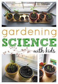 "Plant science activity to do at home with kids.  Observe a plant ""race"" with kitchen pantry items!"