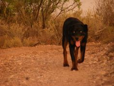 Do you live in the desert Southwest? Then you need to know about Valley Fever in Dogs, AKA Coccidiomycosis