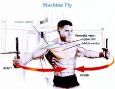 Chest Exercises For Beginners Chest Workouts, At Home Workouts, Fitness Diet, Health Fitness, Workout Machines, Fitness Machines, Shoulder Workout, Shoulder Exercises