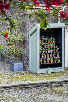 Auricula theatre in the courtyard. Formal Gardens, Outdoor Gardens, Plant Theatre, Garden Inspiration, Garden Ideas, Primula Auricula, Seaside Garden, Cumbria, Back Gardens