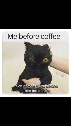 38 Ideas Funny Work Quotes Coffee Caffeine For 2019 Funny Cats, Funny Animals, Cute Animals, Funny Quotes, Funny Memes, Hilarious, Coffee Jokes, Funny Coffee, I Love Coffee