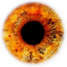 """Eyescapes"""" is a series of photographs irises. It's a project by Rankin, London-based photographer and co-founder of the magazine Dazed & Confused."""