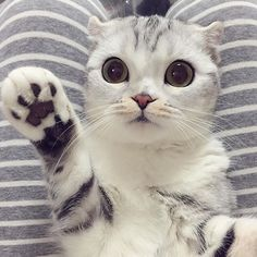 This is the most adorable cat I have ever seen!!!