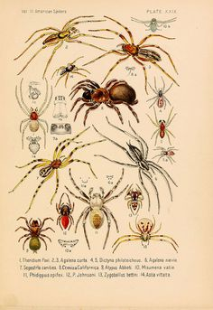 American spiders and their spinningwork. V.3  Academy of natural sciences of Philadelphia,1889-93.