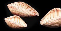 Yalos Murano glass Shell