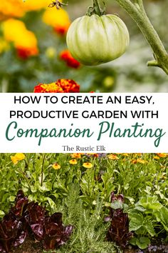 Companion planting can make gardening so much easier and more productive. Learn the benefits of companion planting and the most common combinations to have the most productive, easiest to take care of, vegetable garden you've ever had this year! Soil Improvement, Organic Gardening, Common Garden Plants, Garden Pests, Sustainable Garden, Planting Vegetables, Natural Insect Repellant, Companion Planting, Soil Health