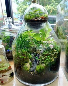 48 Brilliant Indoor Fish Pond Design Ideas For Small Spaces To Have Plants In Jars, Inside Plants, Terrarium Plants, Water Terrarium, Terrarium Ideas, Plant Aesthetic, Nature Aesthetic, Indoor Garden, Indoor Plants