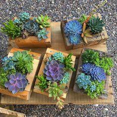 Good morning everyone 🤗💕🌵 . . . . . , . #csgsucculents #woodenbox #repurposed #pallet#wood #reclaimedwood #beautiful #echeveria #succulents #colorful #rustic#centerpiece