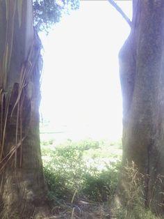 Trees!!!