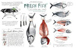 wendy macnaughton. Food, journal, sketchbook, drawings and words, illustration, art.