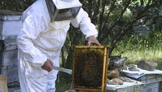 21 de junio: Día del apicultor