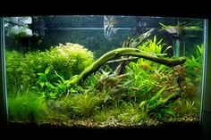 Russell's Aquarium Journals: 29 Gallon Planted Tank