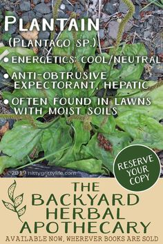The Backyard Herbal Apothecary is your guide to seeing the landscape through the eyes of an herbalist. Features traditional & evidences -based uses, identification & home remedies for 50 herbs. Home Remedies For Spiders, Cold Home Remedies, Natural Health Remedies, Herbal Remedies, Holistic Remedies, Common Lawn Weeds, Weeds In Lawn, Healing Herbs, Medicinal Plants
