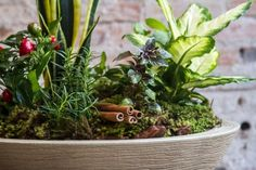 Para trazer proteção ao lar, aprenda a montar um VASO DE 7 ERVAS | Jardim das Ideias STIHL - Dicas de jardinagem e paisagismo