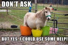 Do you have a horse that likes to get into trouble? #horse #humor #funny #ponies