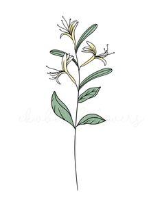 #honeysuckle #flowertattoos #floralart #floraltattoo #birthflowers #linedrawings #botanicalart #botanicalillustration #botanicaltattoo #customtattoo June Birth Flower, Birth Month Flowers, Birth Flower Tattoos, Honeysuckle Flower, Tattoo Ideas, Black And White, Digital, Drawings, Prints