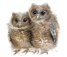 Owl watercolor Baby Owls Painting Bird Art Print by MiraGuerquin Owl Watercolor, Watercolor Paintings, Watercolours, Vogel Illustration, Owl Artwork, Wildlife Decor, Wildlife Art, Bee Art, Baby Owls