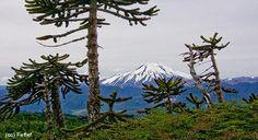 Curacautín- Lonquimay - Sitio oficial de Turismo de Chile