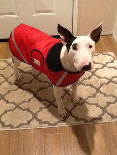 Doodlebug Dud's Dog Raincoat Custom Sizing for an by doodlebugduds, $35.00