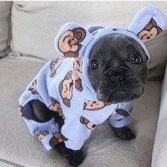 French Bulldog puppy in monkey pajamas French Bulldog Puppies, Cute Dogs And Puppies, I Love Dogs, French Bulldogs, Doggies, Frenchie Puppies, French Bulldog Blue, Adorable Puppies, Corgi Puppies