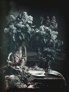 Autochrome anonyme, nature morte, Circa 1910 - Antiq Photo - Photographies - [( 04. Autochromes supprimer_numero)] - Achat, vente et estimation gratuite d'appareils photos anciens, de photographies de collection et de daguerréotypes.