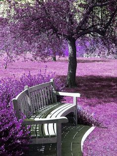 A PURPLE place for peaceful thoughts.