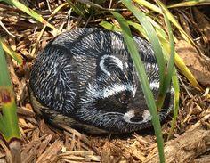 raccoon painted rock
