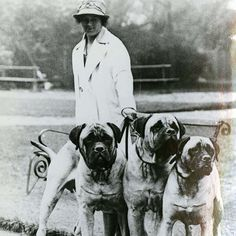 Mastiff Dog Breed Information Mastiff Dog Breeds, Akc Breeds, Mastiff Puppies For Sale, Bullies, History, Fictional Characters, Historia, Bullying, Fantasy Characters