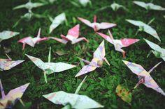 Paper cranes Guads & Sega #martandsega Paper Cranes, Amp, Plants, Flora, Plant