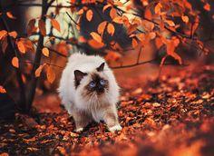 15+ Animals Enjoying Autumn Magic