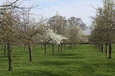Bright Perry Blossom