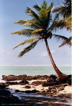 Palmier - Anaribe, Toamasina, Madagascar