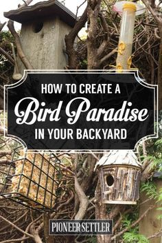 Bird Baths, Bird Houses, Bird Feeders, and How to Keep Your Backyard Birds Happy | Pioneer Settler